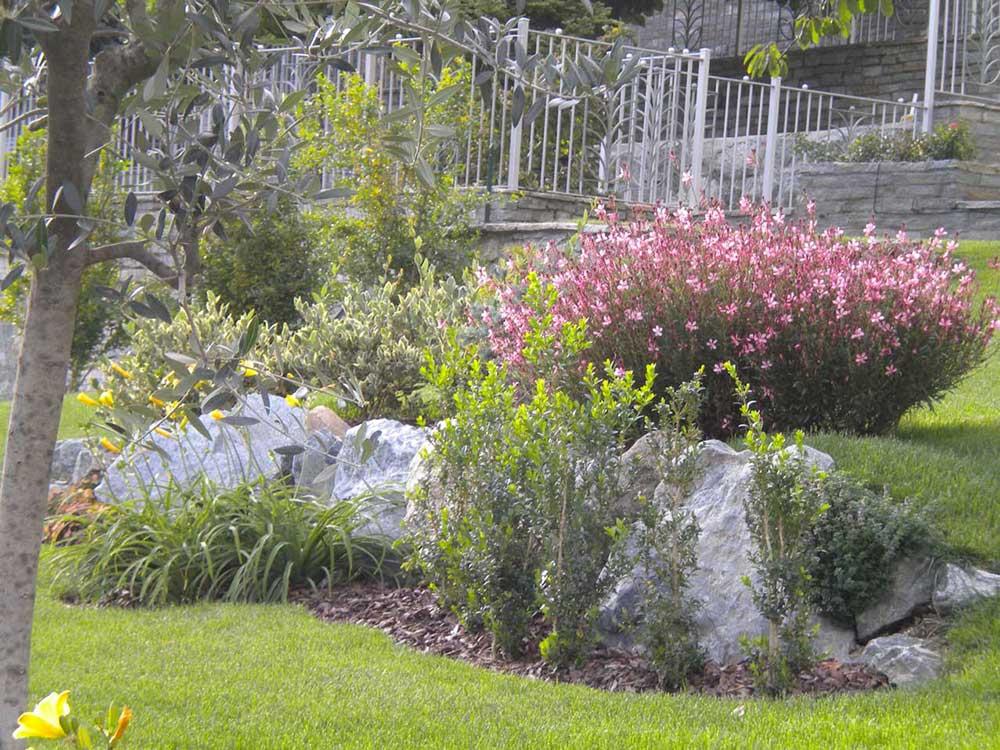 essenze vegetali valle aosta arte verde