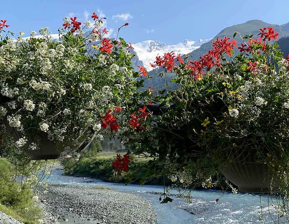 fioriture stagionali vivaio valle aosta