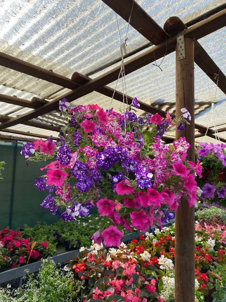 fioriture stagionali01