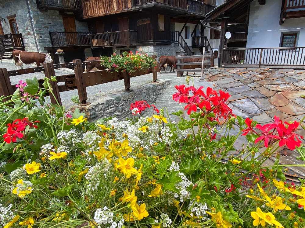 fioriture stagionali04