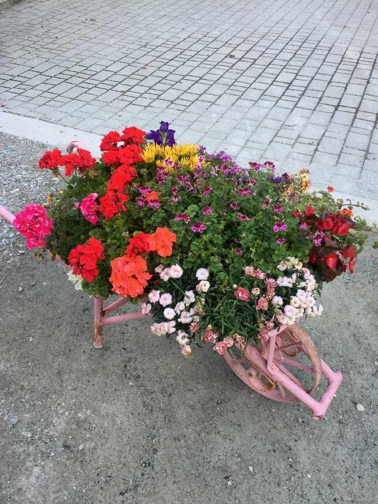 fioriture stagionali06