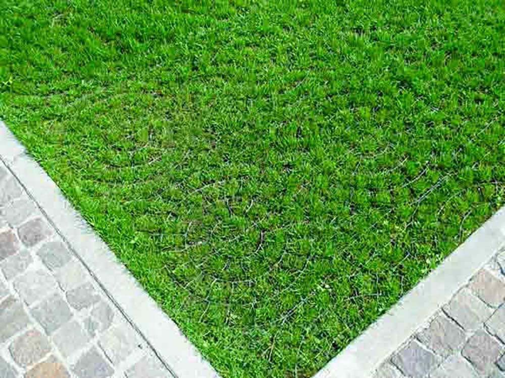 green parking valle aosta torino arte verde